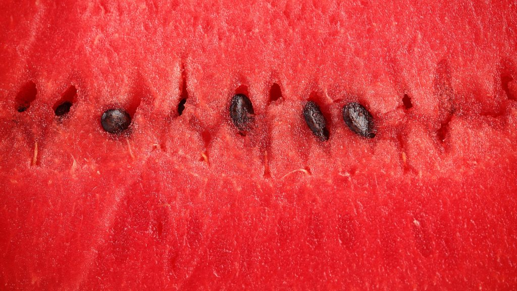 fruits watermelons seeds red