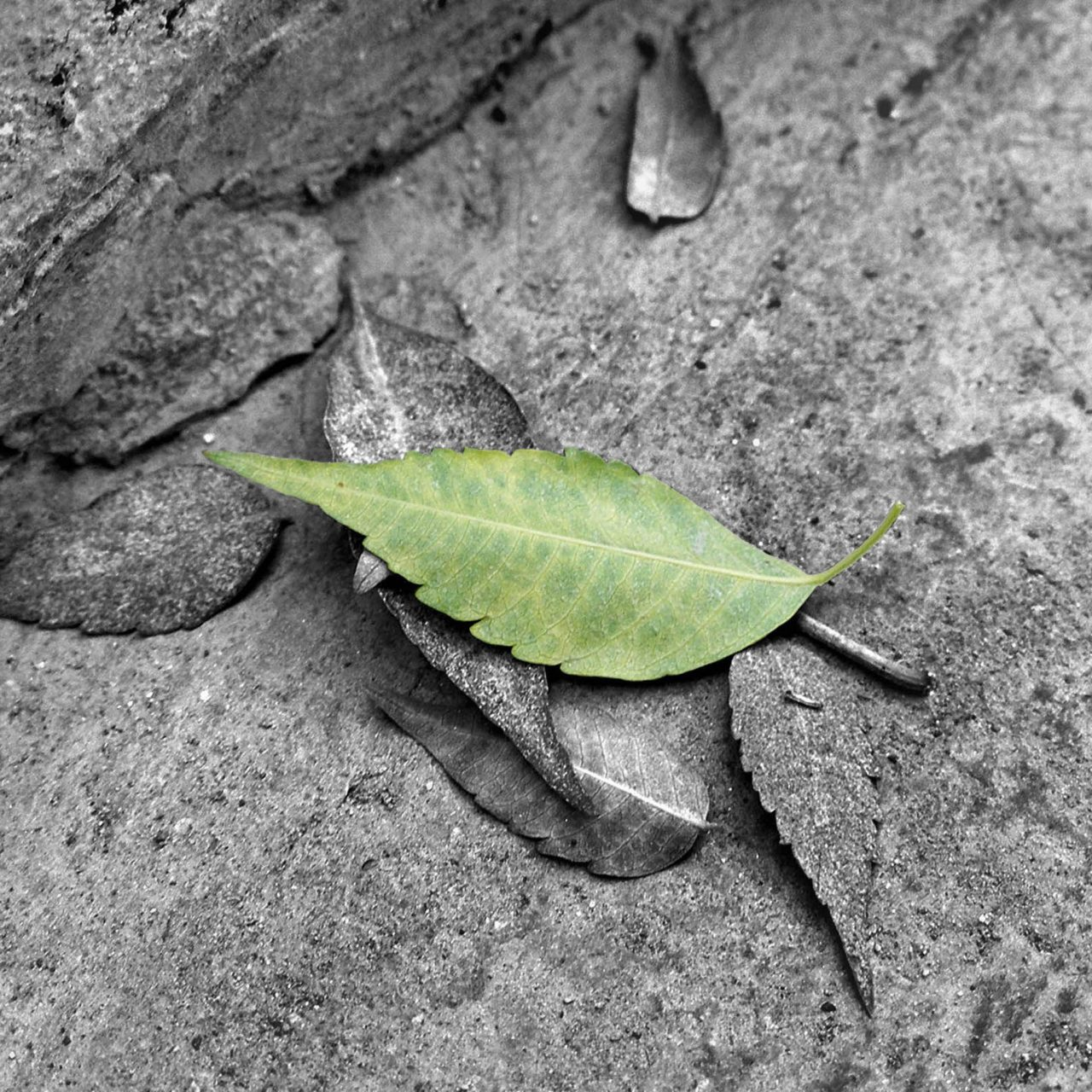 Accented Leaf