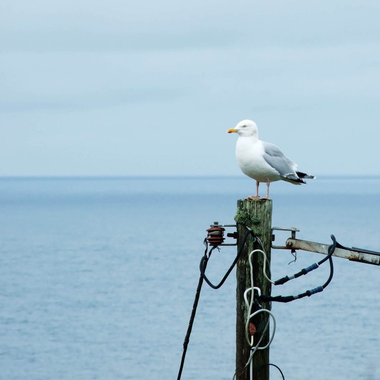 Gull Perched