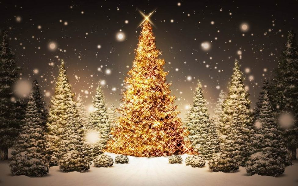 Christmas christmas tree in forest wallpaper