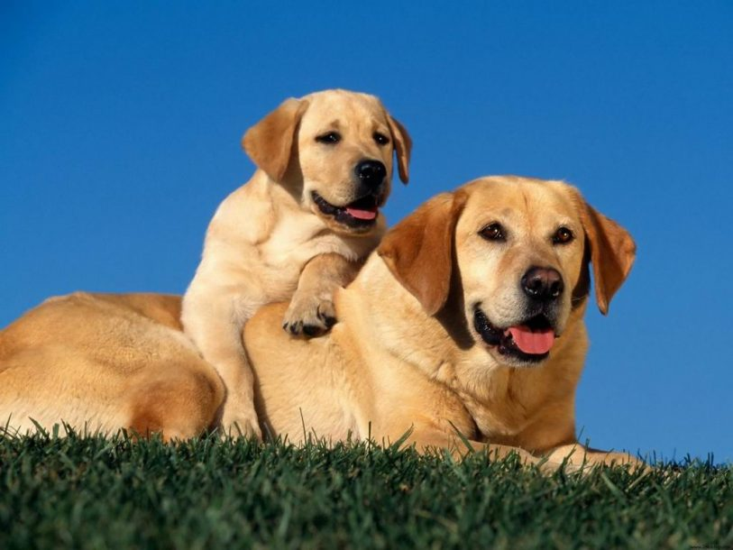 Dogs dog and puppy wallpaper