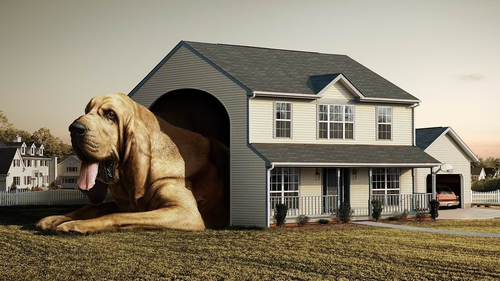 Dogs the dog house wallpaper