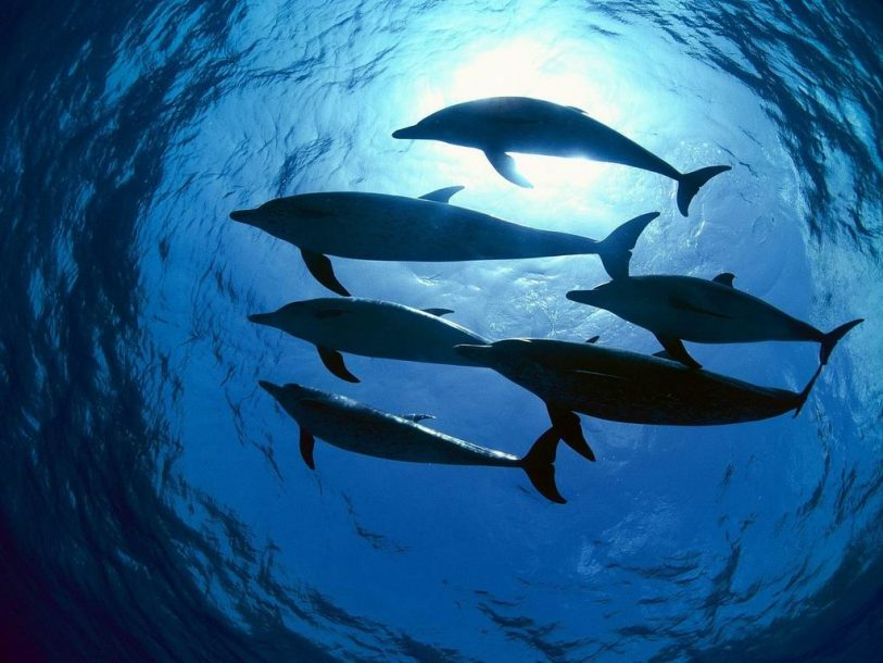 Fish dolphins above wallpaper wallpaper