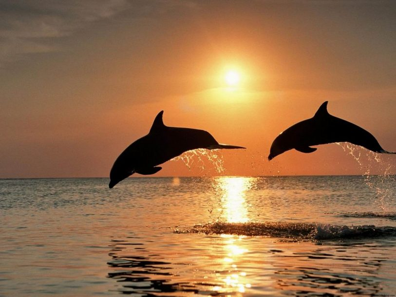 Fish dolphins and sunset wallpaper wallpaper
