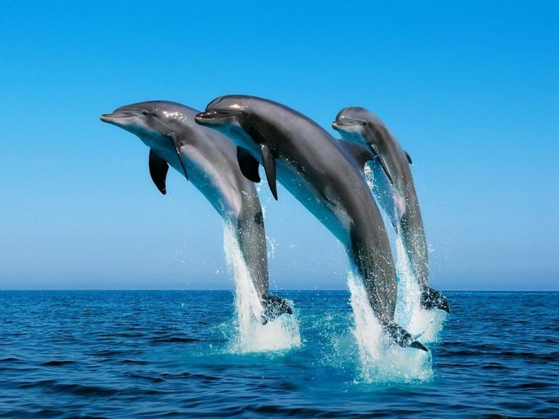 Fish dolphins in the air wallpaper wallpaper